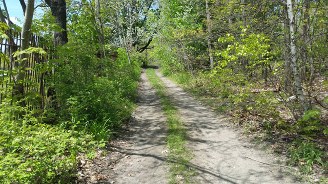 Centralia, PA - Trail Behind Odd Fellows Cemetery