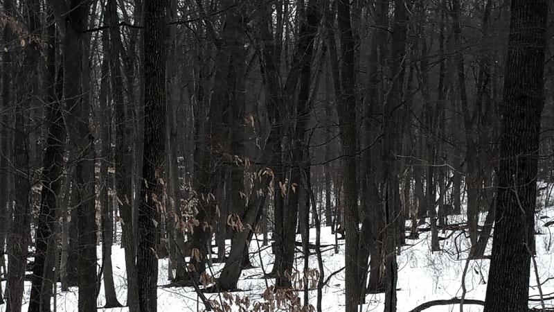 Backyard woods - Horror story inspiration