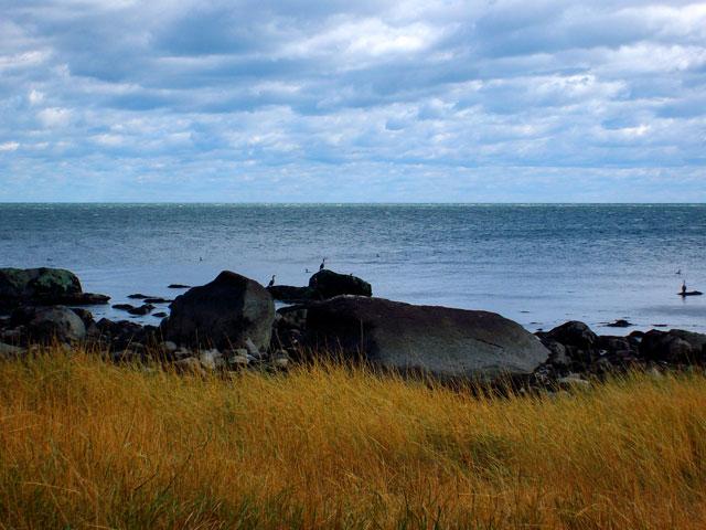 Charles Island Egrets - Milford, CT