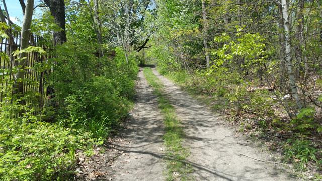 Centralia, PA - Trail Behind Odd Fellows Cemetery