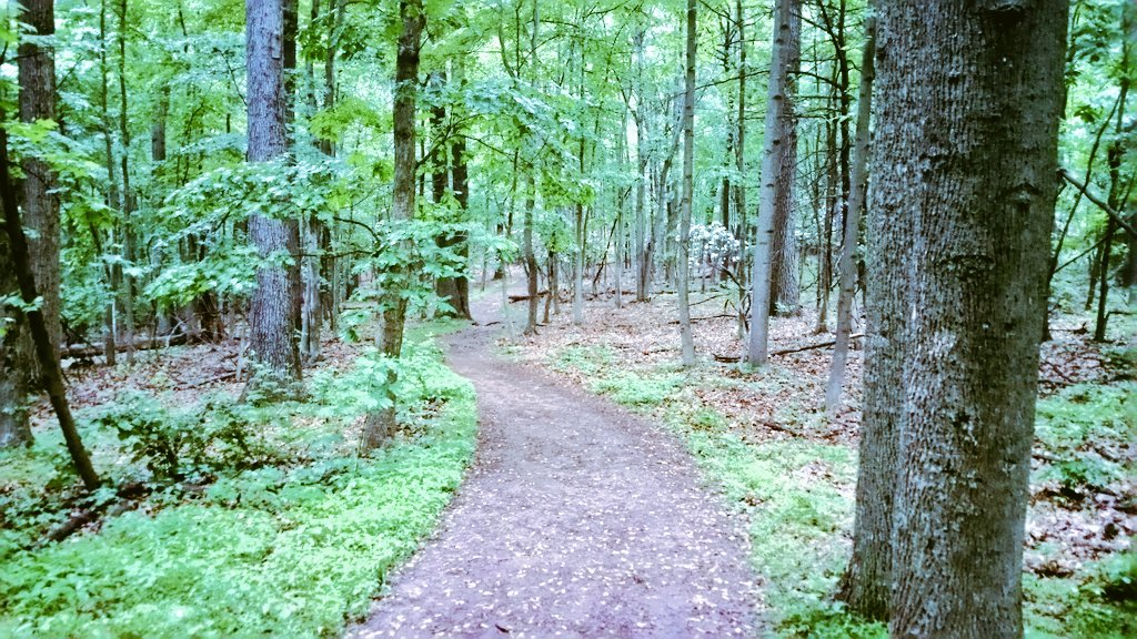 Valley Forge Park Woods